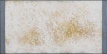 N.CAT. 1575
